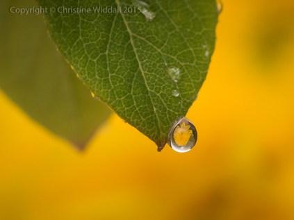Water Drop Refractions 3