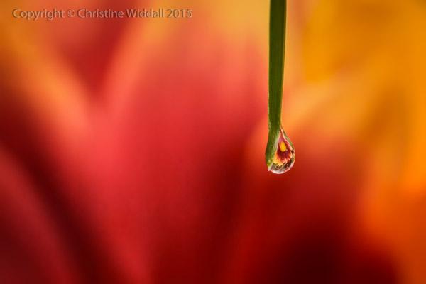 Water Drop Refractions 2