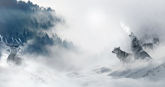 wolf-1350243__180-mountain-pixabay