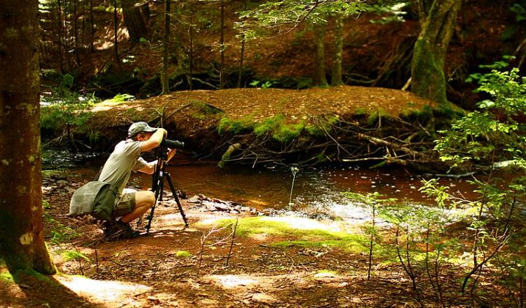 Photography in Christopher Creek