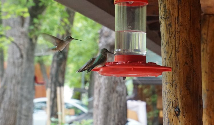 Hummingbirds in Christopher Creek