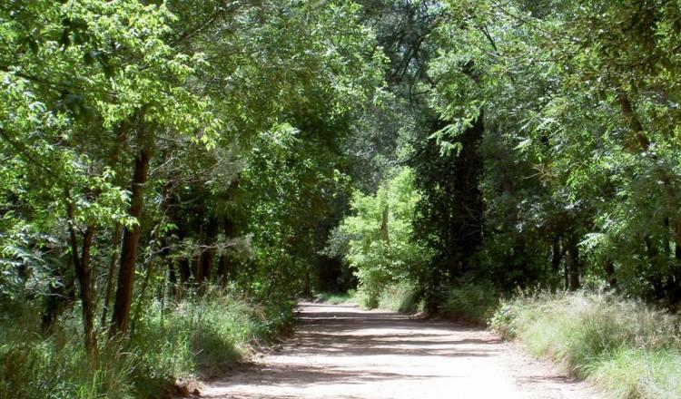 Summer Greenery in Christopher Creek
