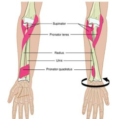 Foot Massage Therapy Diagram Wiring 3 Way Switch Power To Light Supinator « Christopher Howard's Blog