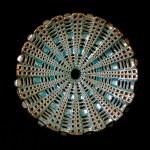 #116. Diatom E, 2.5″ x 9″
