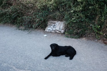 black dog, white plank on camino de santiago