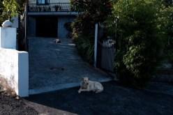 two dogs on path camino de santiago
