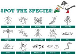 bug Species list