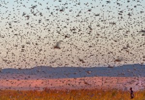 Locusts by Michele Martinelli at Nat Geo