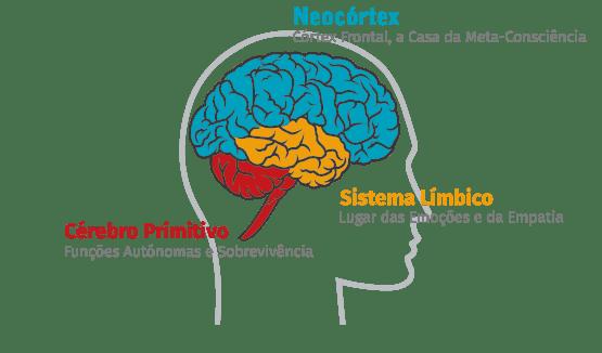 Técnica PROR - Divisão do cérebro humano