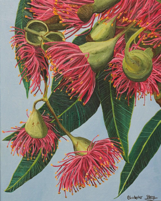 Pink Gumnuts - Oil on canvas - 40cm x 50cm