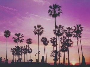 Tropical Palm Trees Los Angeles