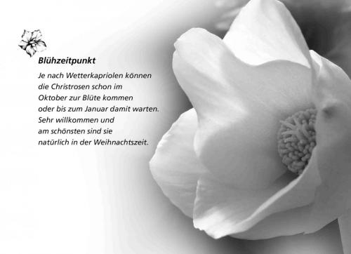 k Adventskalender_31