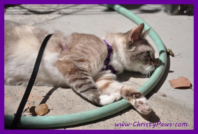 laying in the sun