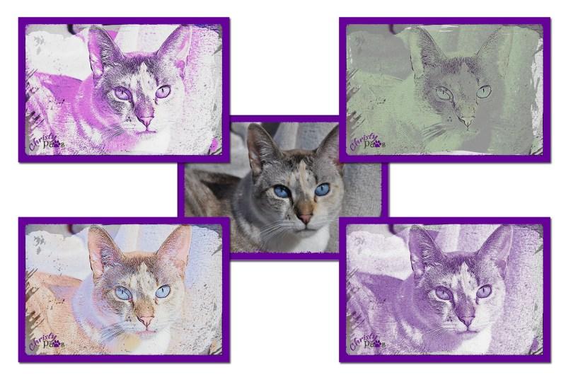 Purple composite