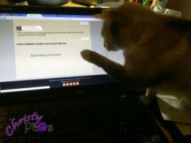 Blogging Kitty Morning Routine - Blogoversary and Comment-a-thon for A-Pal Humane Society