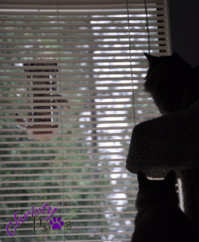 Two cats watching
