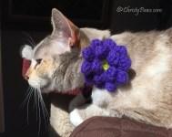 Crocheted flower on collar