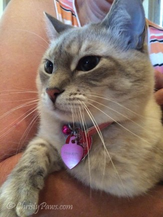 Miss Kitty - Sunday Selfie guest