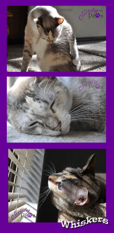 Wordless Wednesday Blog Hop: Whiskers #whiskerswednesday www.christypaws.com