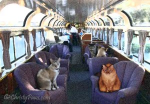 train parlor car - Lionesses on the Prowl