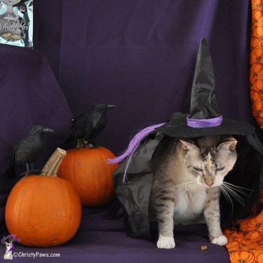Attempting to wear the witch costume