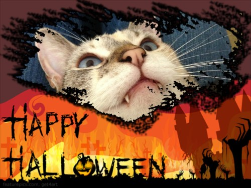 Happy Halloween - Do you have to perform tricks for treats? www.christypaws.com