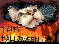 Happy Halloween - Do you have to perform tricks for treats?