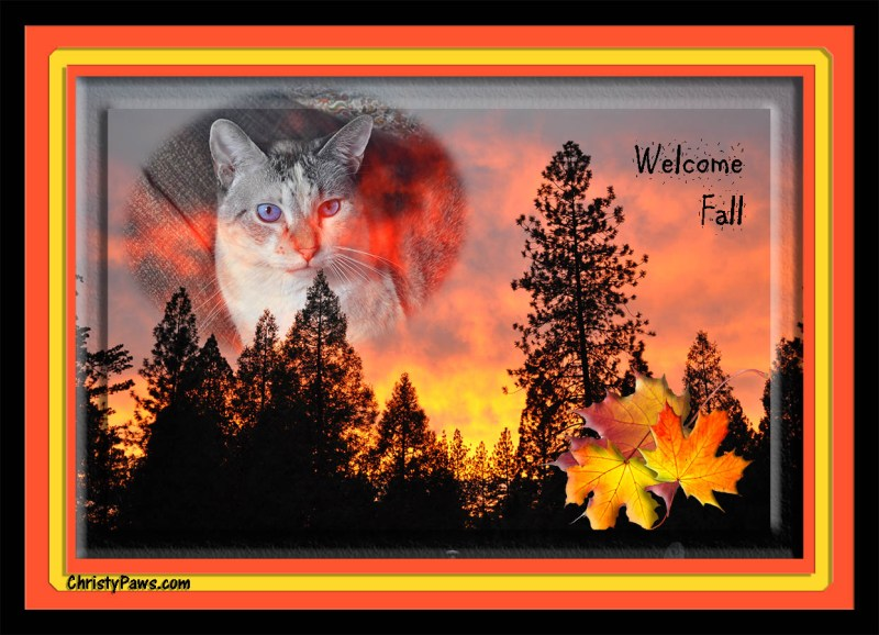 Caturday Art: Flaming Colors of Fall, digitally manipulated photo of a beautiful sunset and a cat. www.christypaws.com