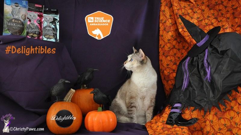 Christy looking up at Delightibles gourmet cat treats
