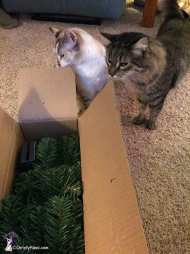 Christy and Echo inpsecting box