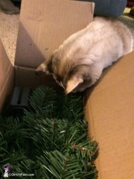 Christy inspecting box