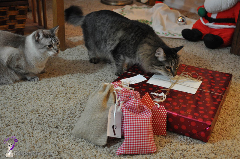 Our Secret Paws Finally Revealed - Echo and Ocean examining the packages