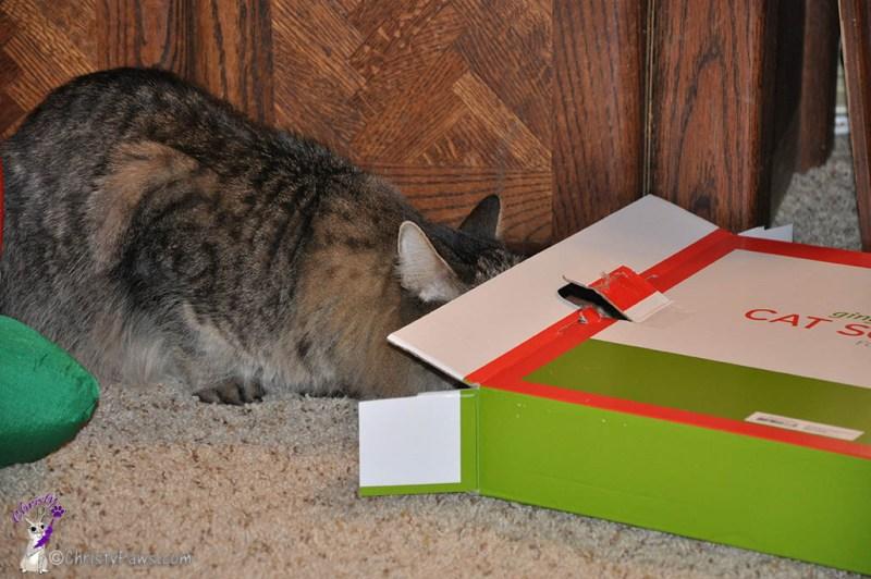 Echo head in box
