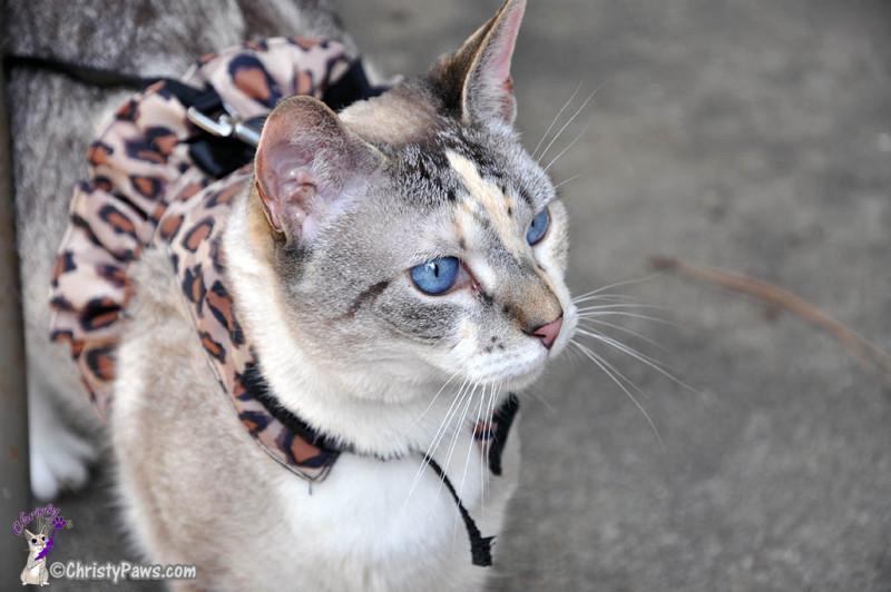 Leopard Harness