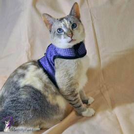 Purple harness photo shoot