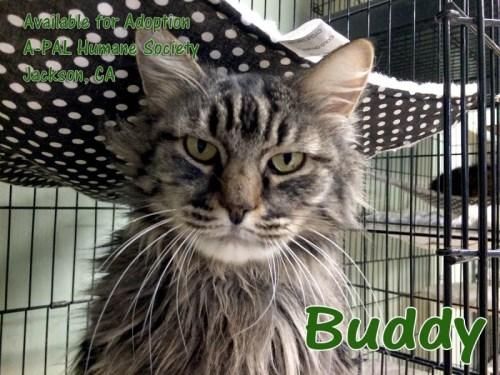 Buddy H