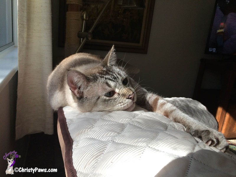 Ocean laying in sun puddle - from We Are Bummed