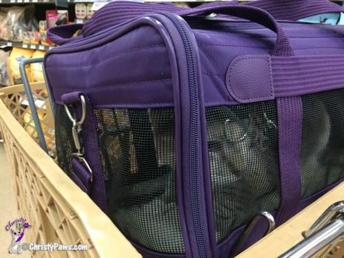 Enjoying the ride around Petco in the shopping cart - wannabe adventure cat