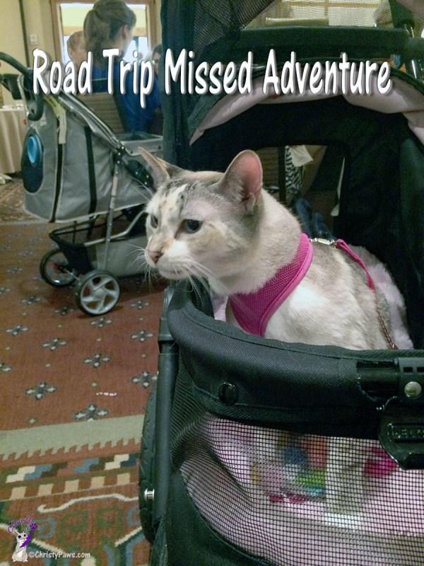 Road Trip Missed Adventure