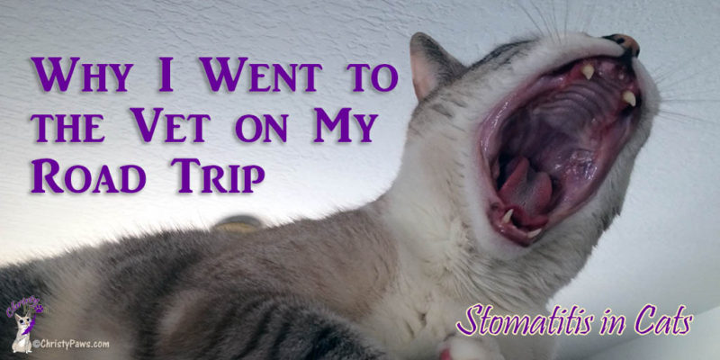 Why I Went to the Vet on My Road Trip - Stomatitis in Cats