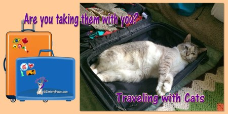 Whether you are a seasoned veteran traveler or getting ready to head out on your first trip, I bet you'll find lots of useful information on traveling with cats in these posts from some of my best pals.