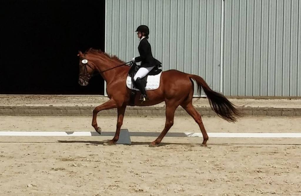 Riding my thoroughbred, Remy, at a show.