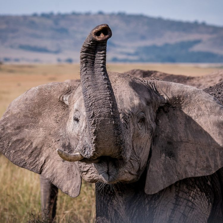 International Travel photographer,Amboseli