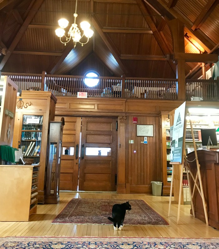 Mito the Library Cat of Mystic & Noank Library