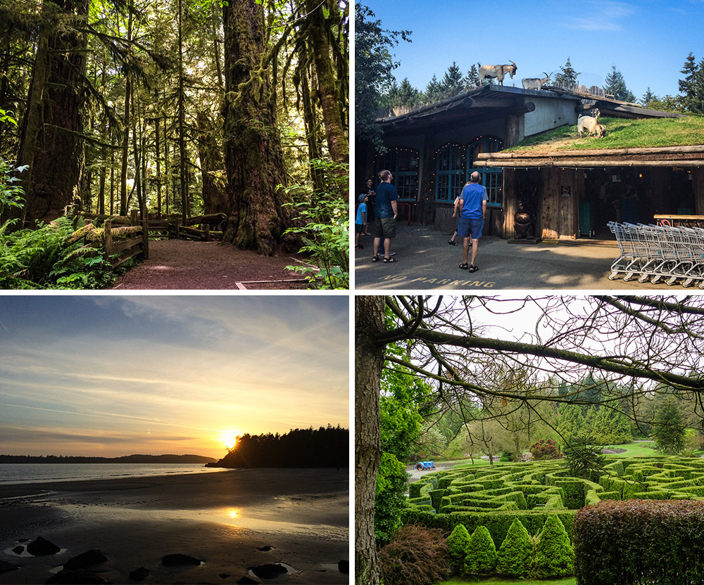 A few of my photos that I contributed to the website; Cathedral Grove at MacMillan Provincial Park, Goats on the Roof at the Old Country Market in Coombs, a sunset in Tofino and the maze at VanDusen Botanical Gardens.