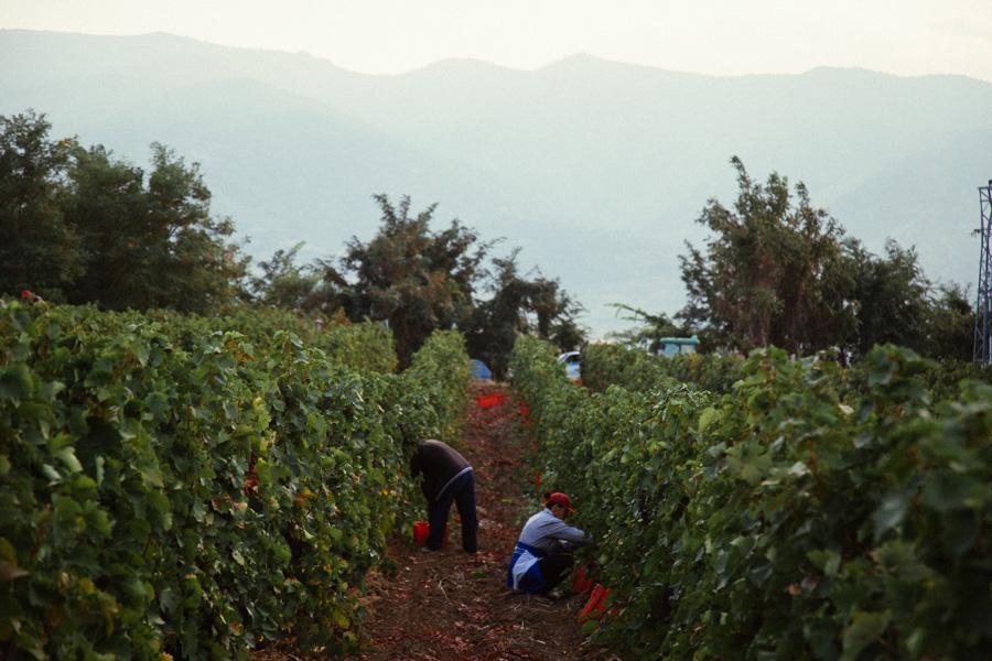 chromahouse-video-productions-company-miami-travel-macedonia-povardarie-wine-region-15