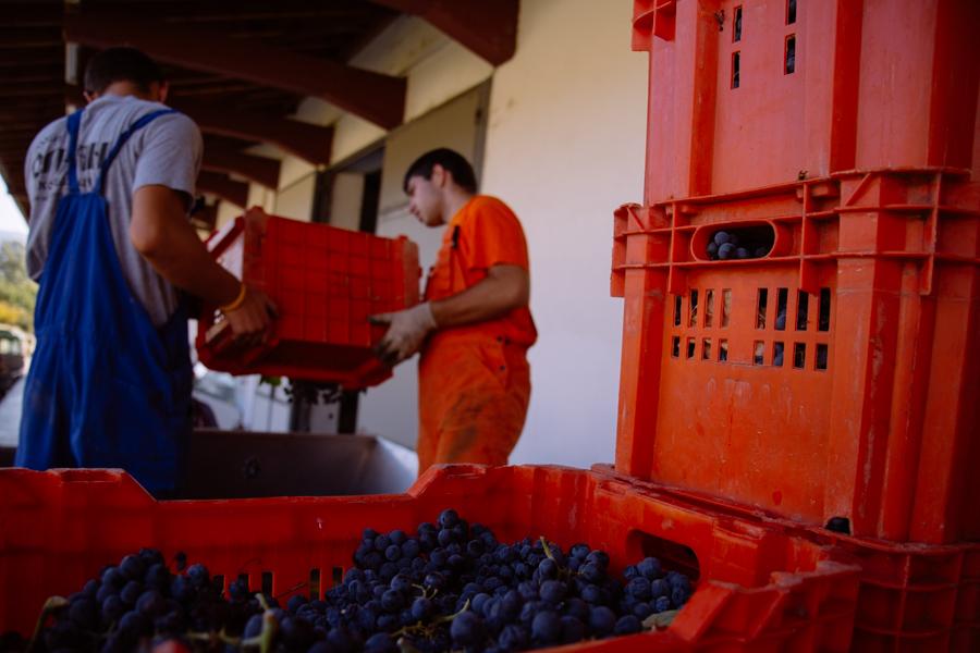 chromahouse-video-productions-company-miami-travel-macedonia-povardarie-wine-region-21