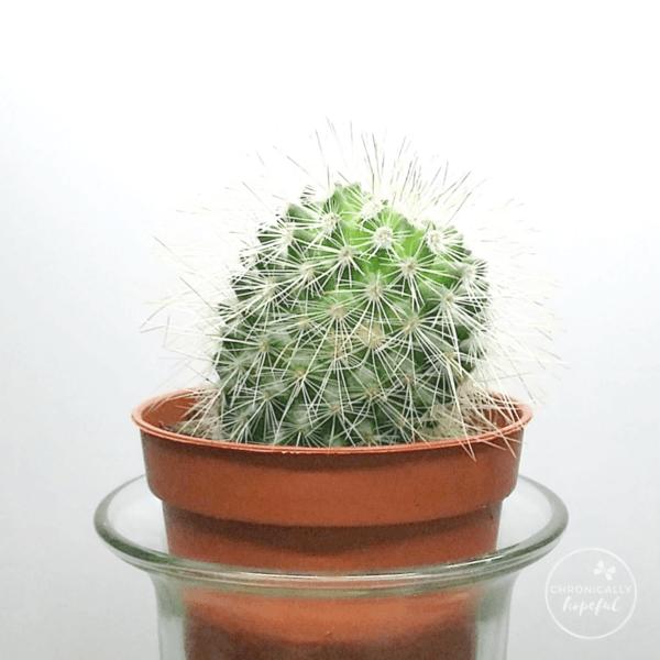 Mini Succulents, Cacti