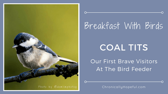 Coal Tits First visitors at Bird Feeder, Breakfast With Birds, ChronicallyHopeful