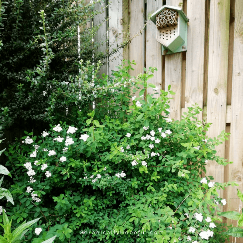Bug hotel on the wooden fence, flowering bushes in front.
